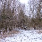 Forchtenstein-Winter-2015-03