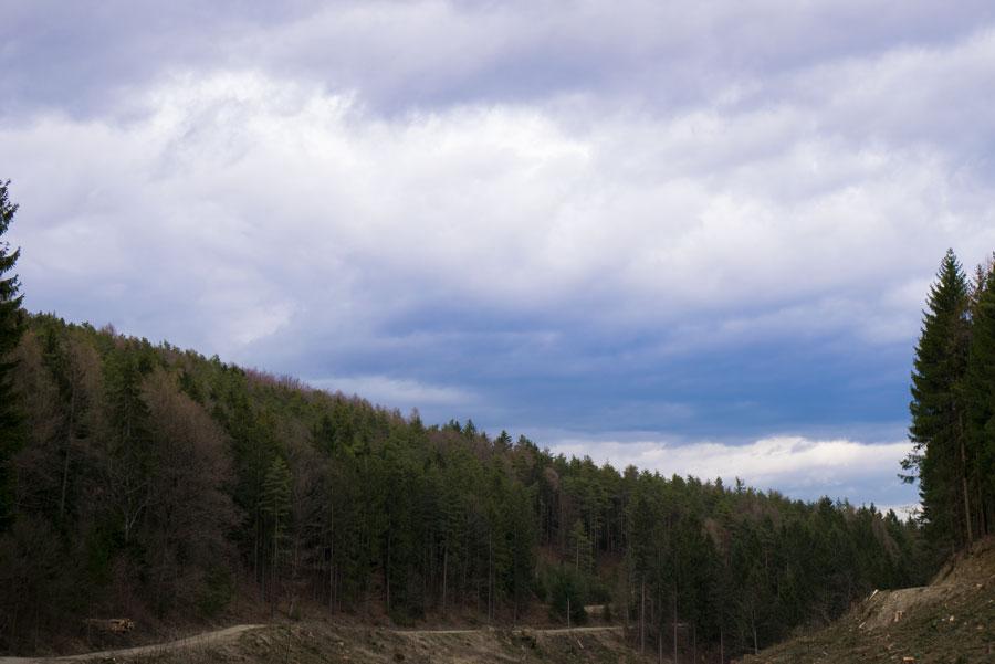 Paradies-Baum-gerodet-Forchtenstein