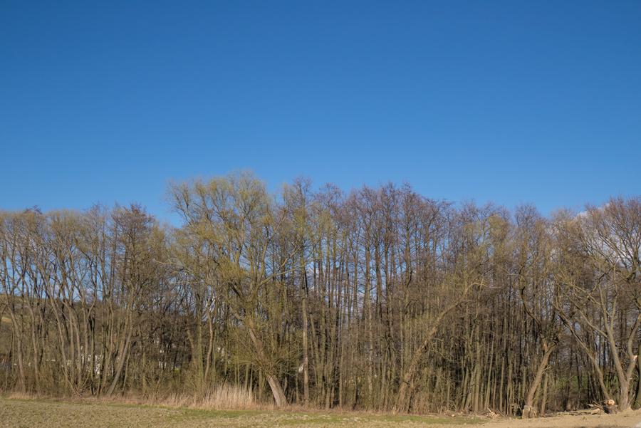 Nordic-Walking-Forchtenstein-April-02