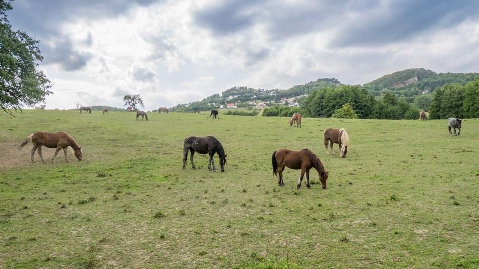 Pferde-Forchtenstein-September-2015