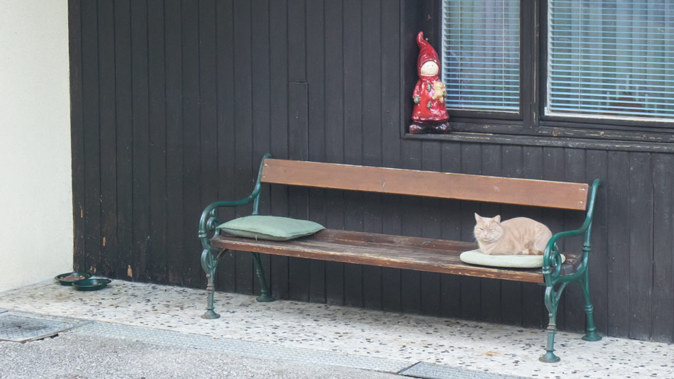 Katze-Burgenland-Dezember