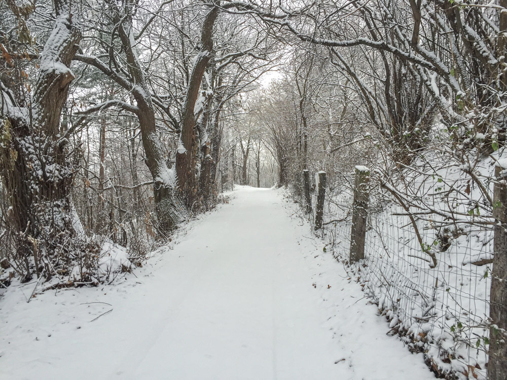 Schnee-in-Forchtenstein-Winter-Nordic-Walking